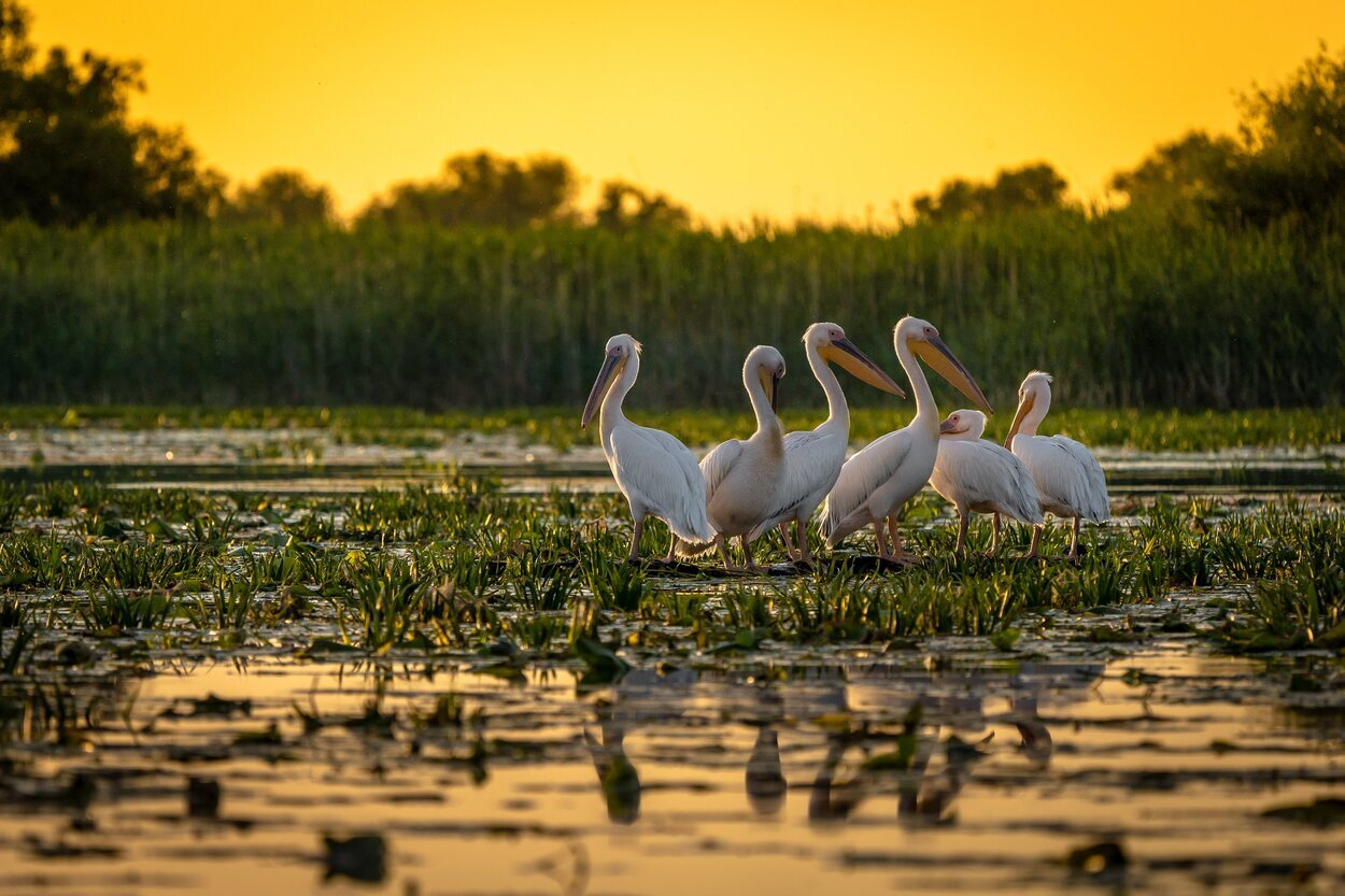 Numerosas especies viven y pasan al año por esta zona llena de fauna