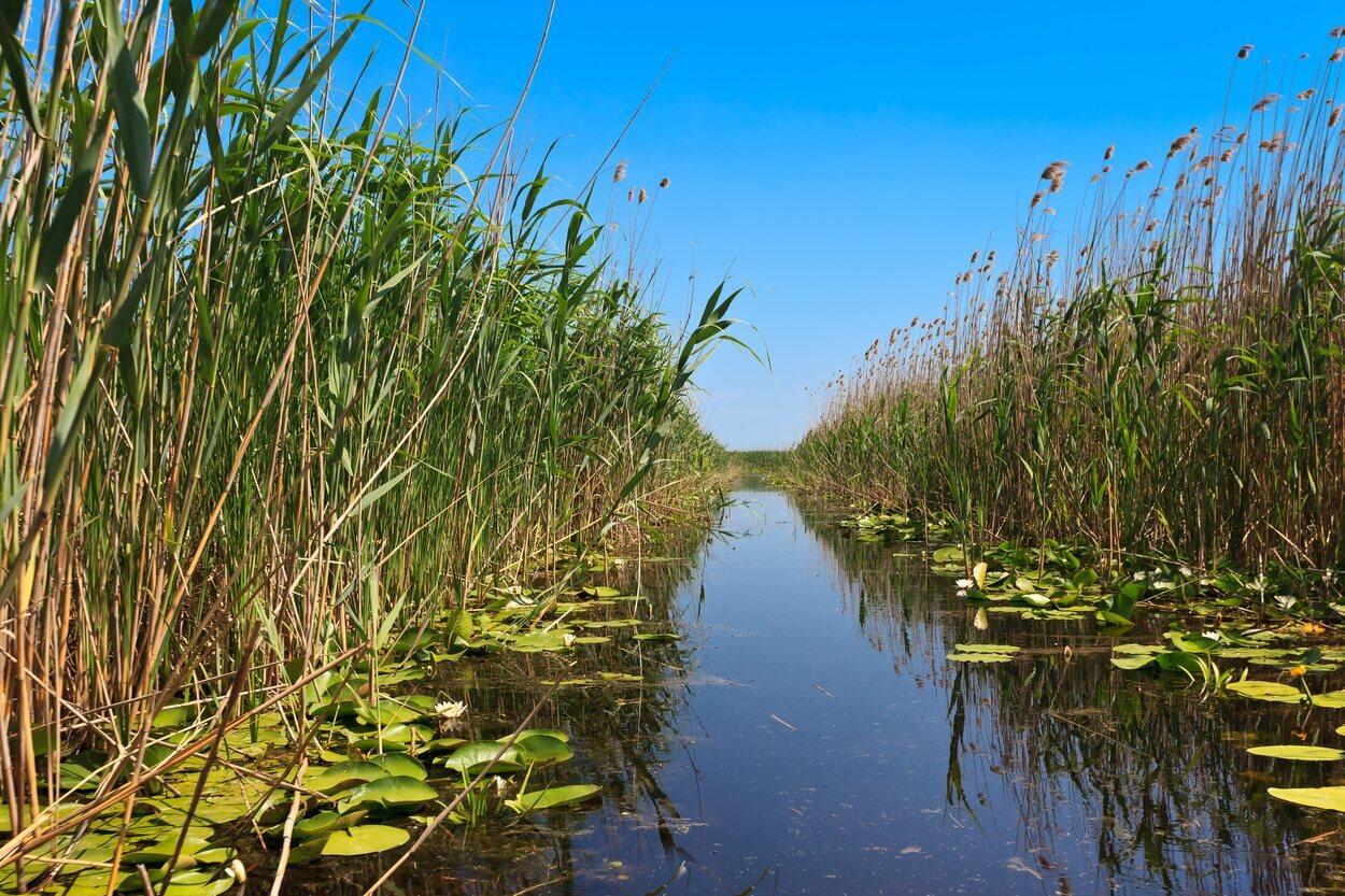 El Delta del Danubio está plagado de vegetación