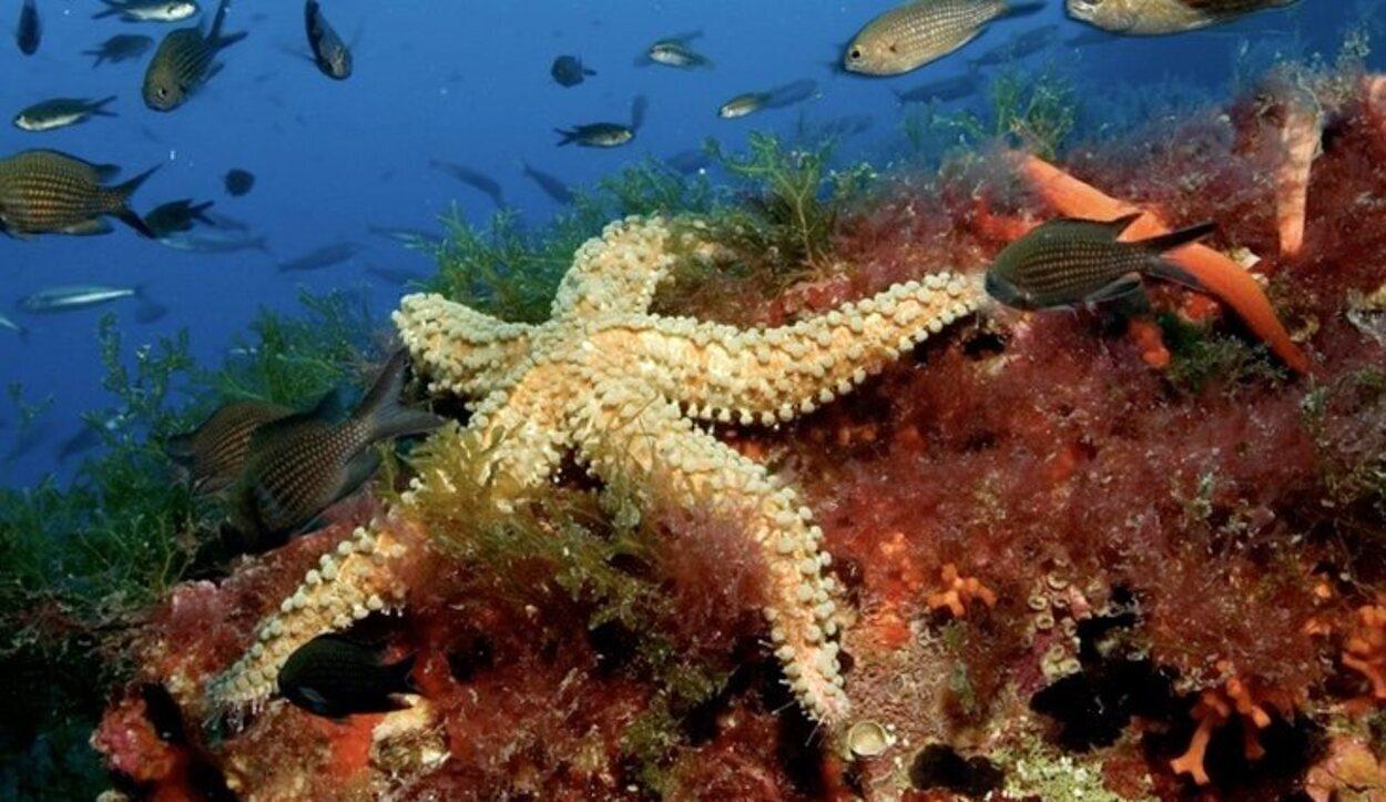 El fondo marino de Formentera constituye el tesoro natural de las Islas Pitiusas