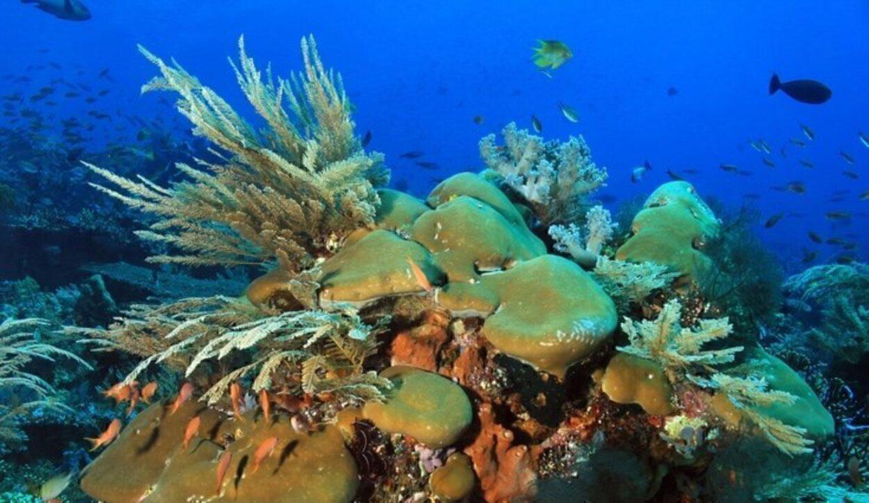 Además del dragón de Komodo, en la isla viven72 especies de aves, el ciervo de Timor y distintas especies exóticas de peces, tortugas y ballenas