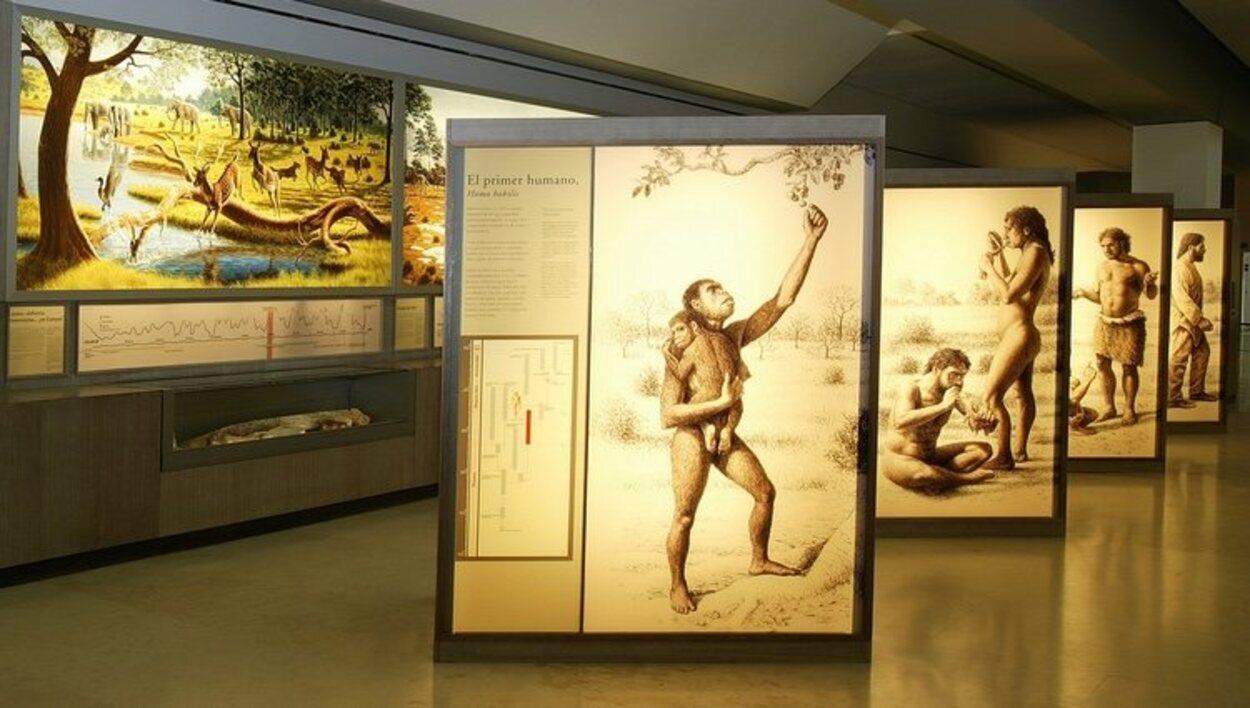 Interior del Museo de Altamira | Foto: Web oficial
