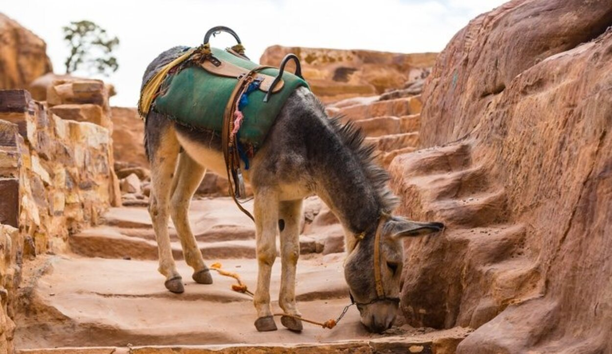Petra debe visitarse durante dos días como mínimo