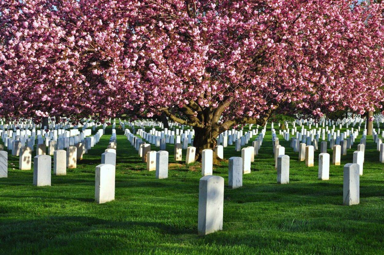 En el Cementerio Nacional de Arlington se enterraron a muchos militares abatidos en guerra
