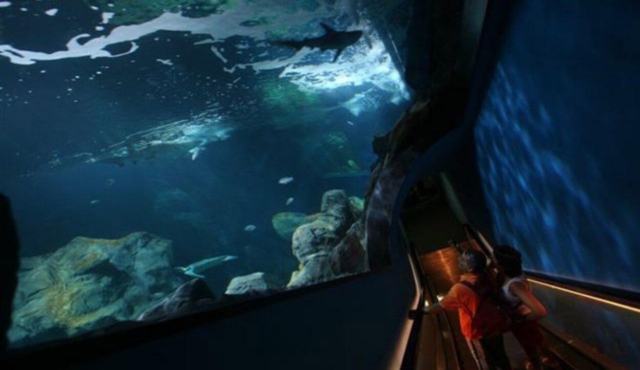 El acuario es una visita obligada para todos los amantes de la flora y fauna marinas