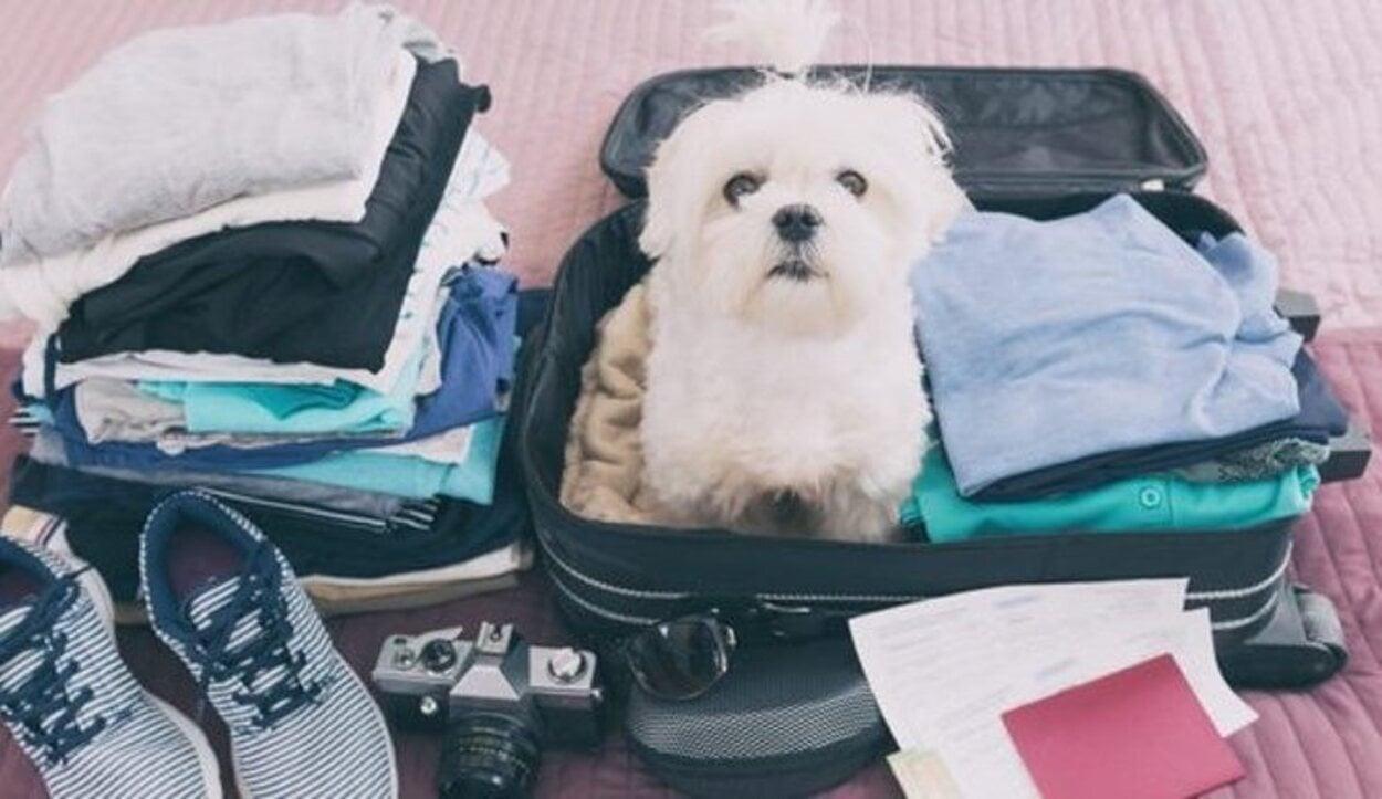 Un gato y un perro no pueden ir en la misma jaula al viajar