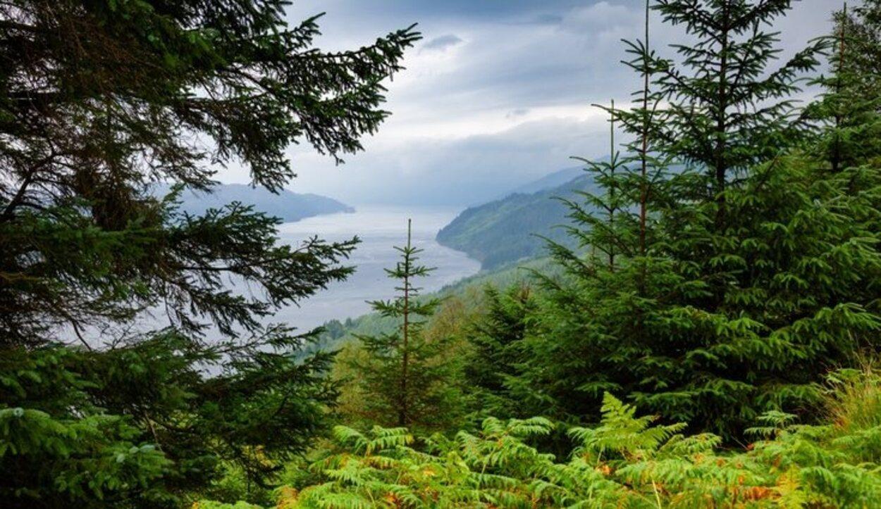 El bosque de Argyll