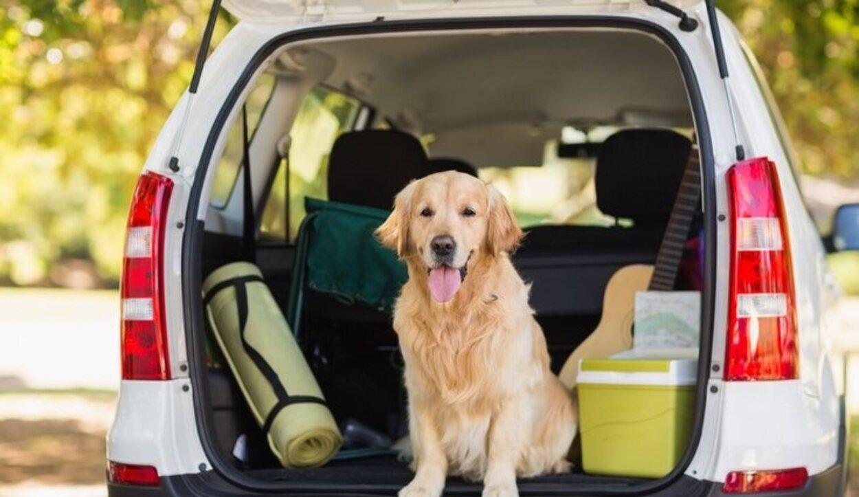 El medio en el que transportes a tu perro es muy importante