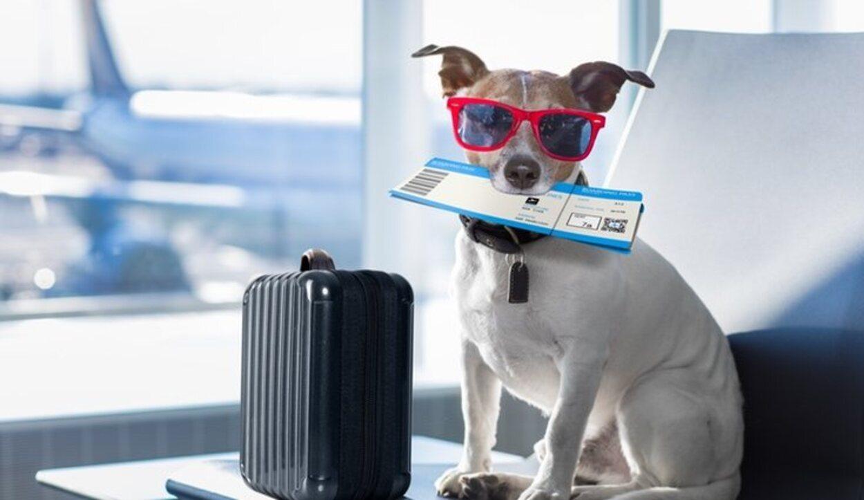 Debes saber todos los documentos que necesita tu mascota para poder viajar