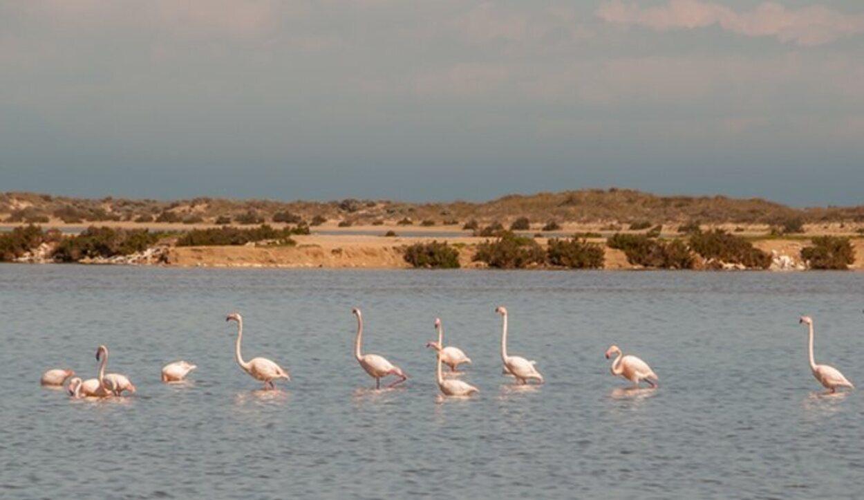 El Mar Menor posee una gran biodiversidad acuática y terrestre