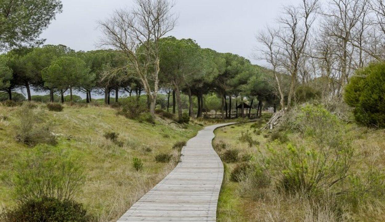 Doñana no se conformo como parque nacional hasta 1969