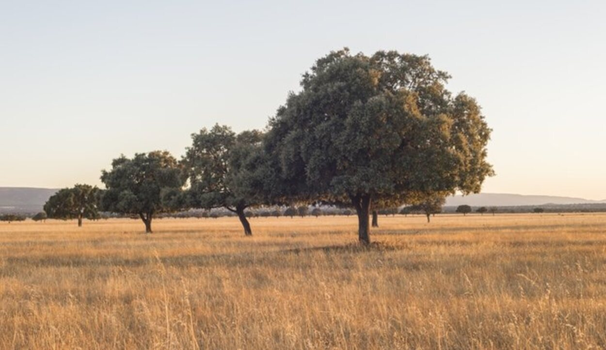 La flora de Cabañeros está centrada en las especies del Bosque Mediterráneo