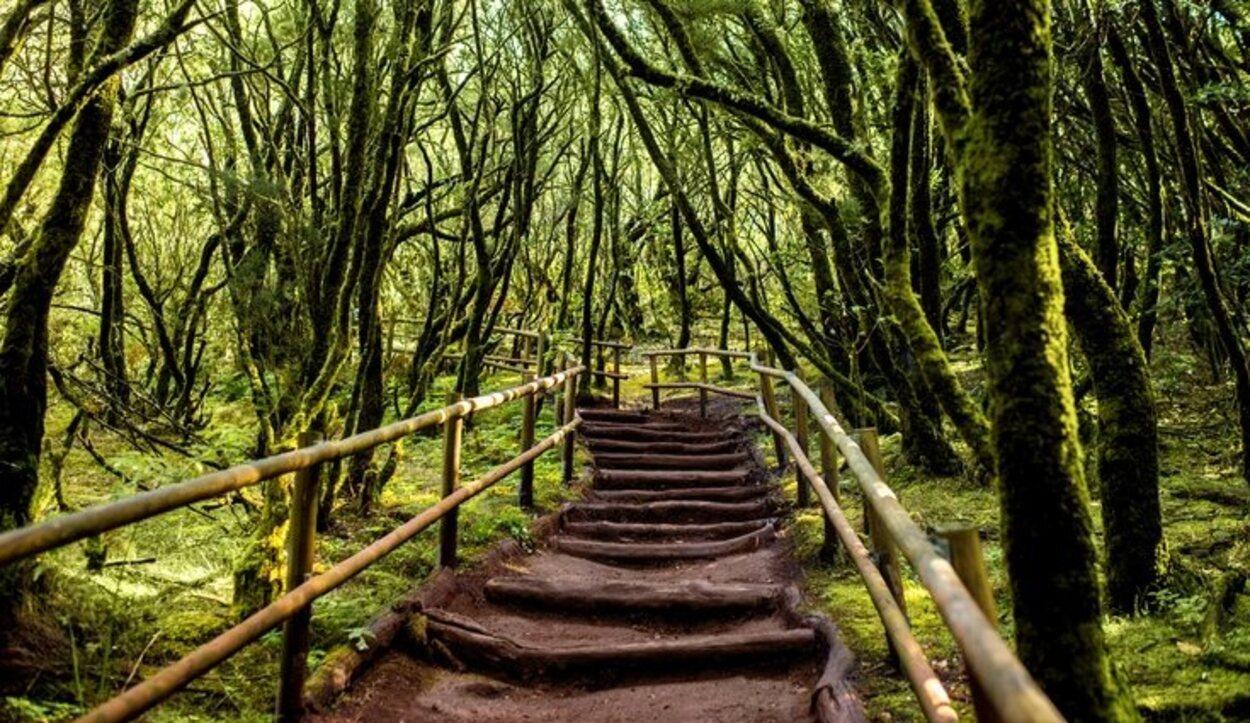 La laurisilva canaria cubre más del 80% del Parque Nacional de Garajonay