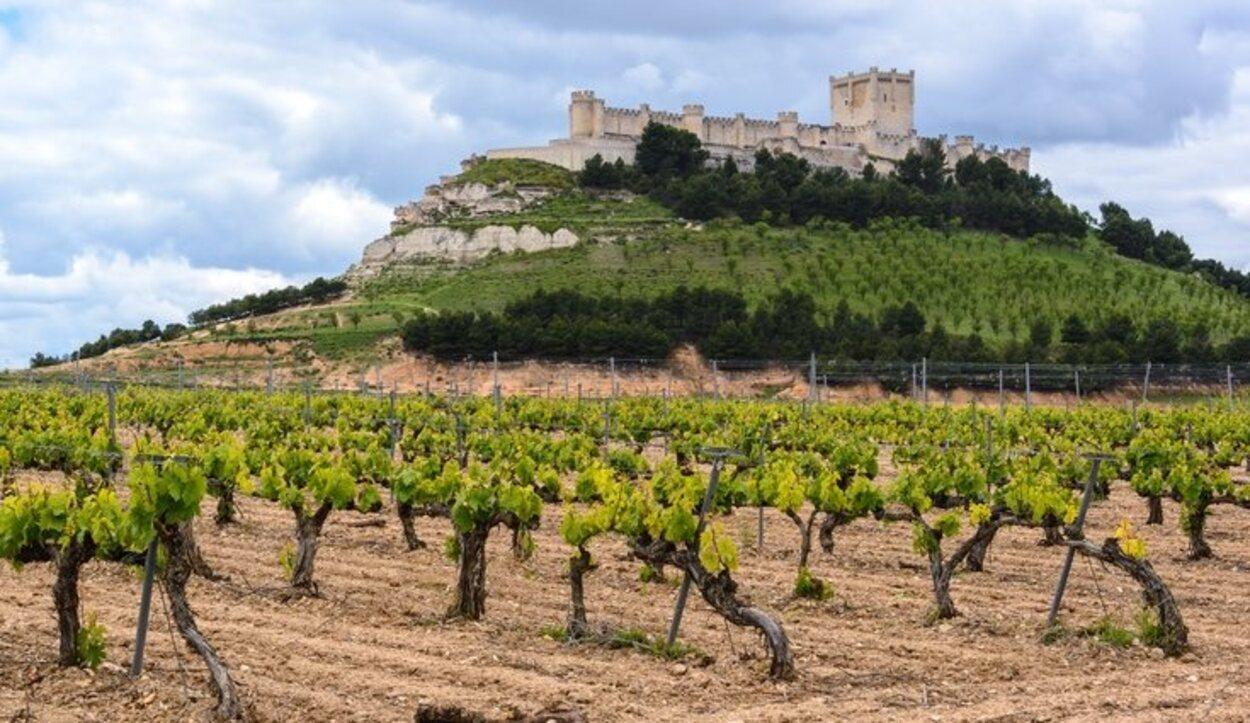 El Castillo de Peñafiel rodeado por las cepas