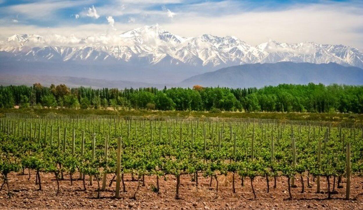 Las espectaculares vistas desde una viña en Mendoza