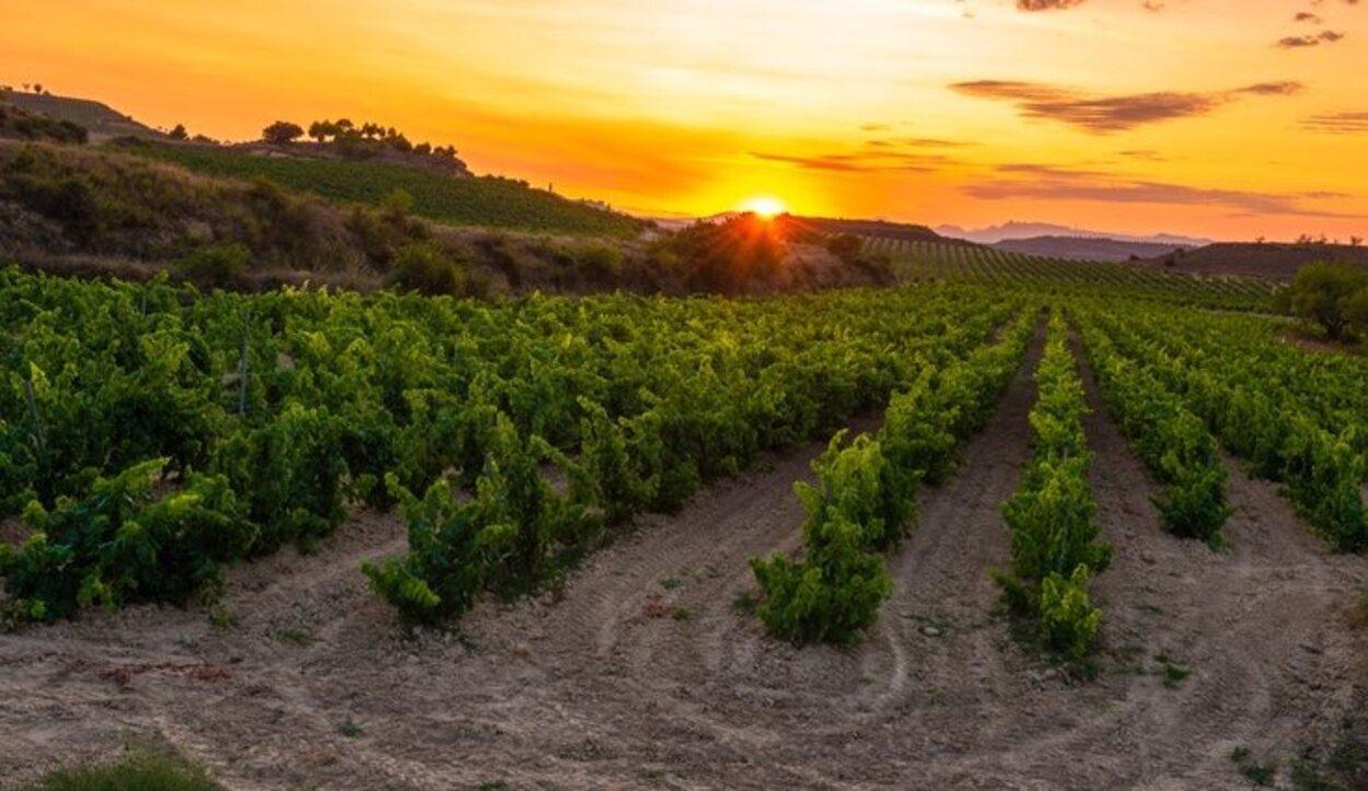 Los vinos que se producen en La Rioja son unos de los más vendidos en todo el mundo