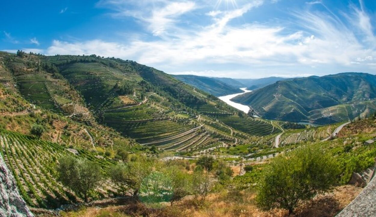 Las plantaciones de vino en la Región del Alto Douro