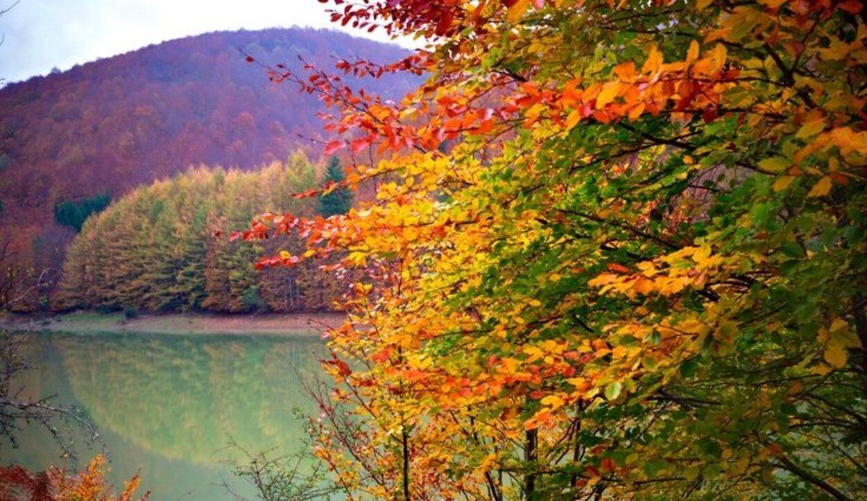 Una selva que se llena de color en otoño