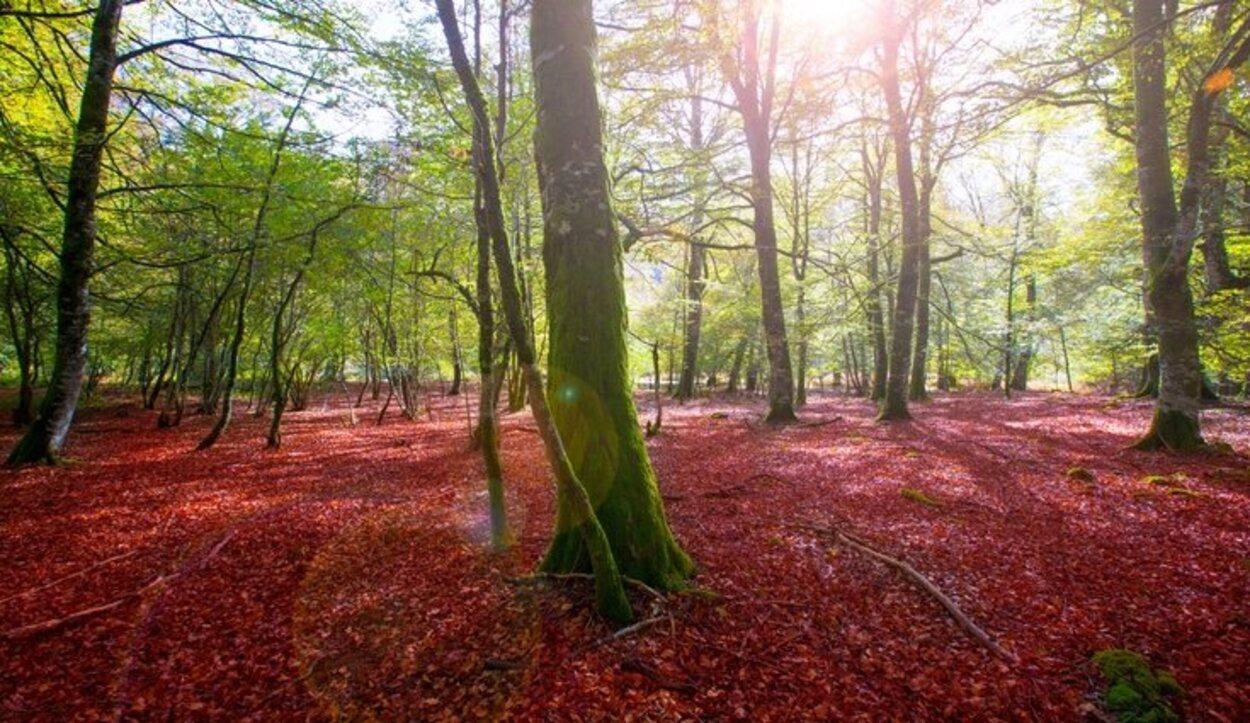 Dentro de la selva se podrán observar diferentes elementos de la naturaleza