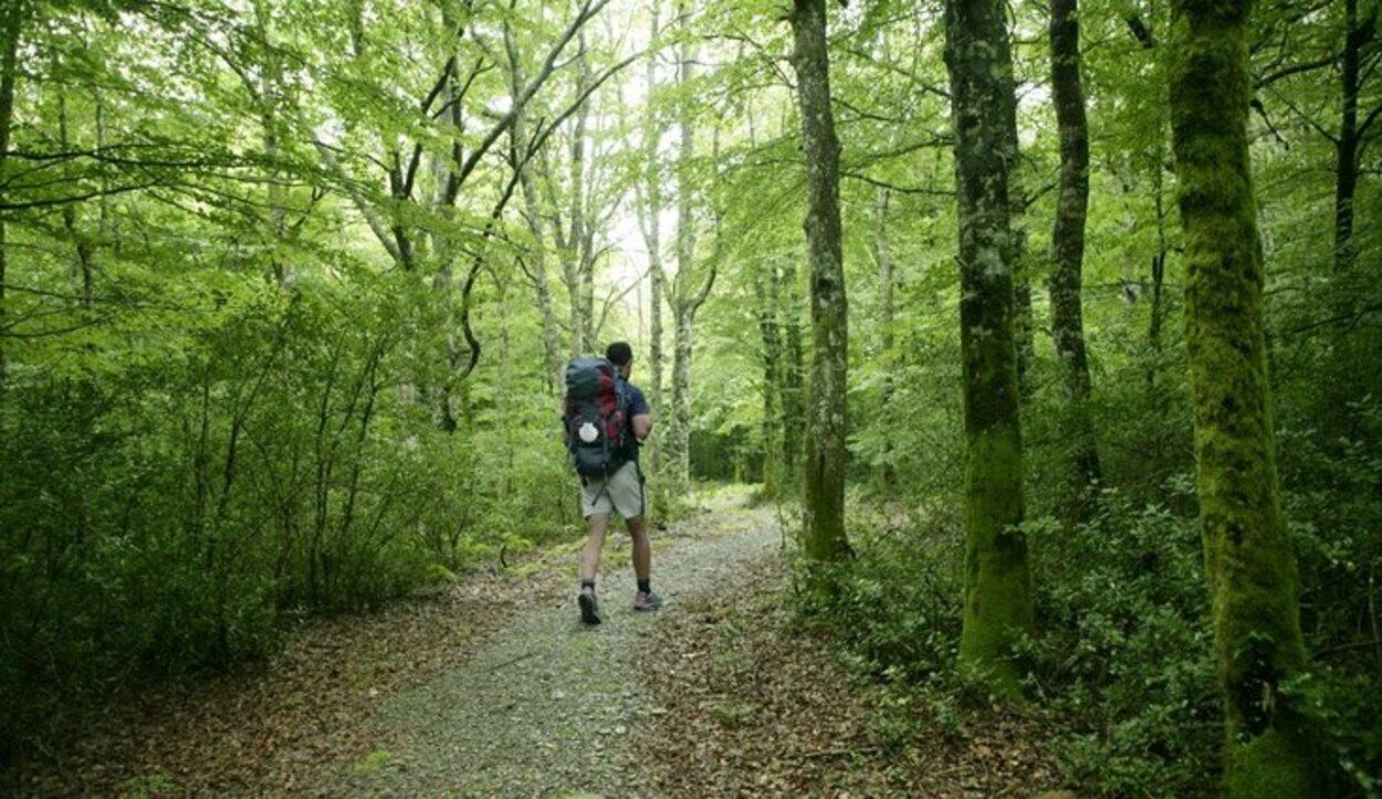 Hay senderos que te permiten hacer rutas por la selva