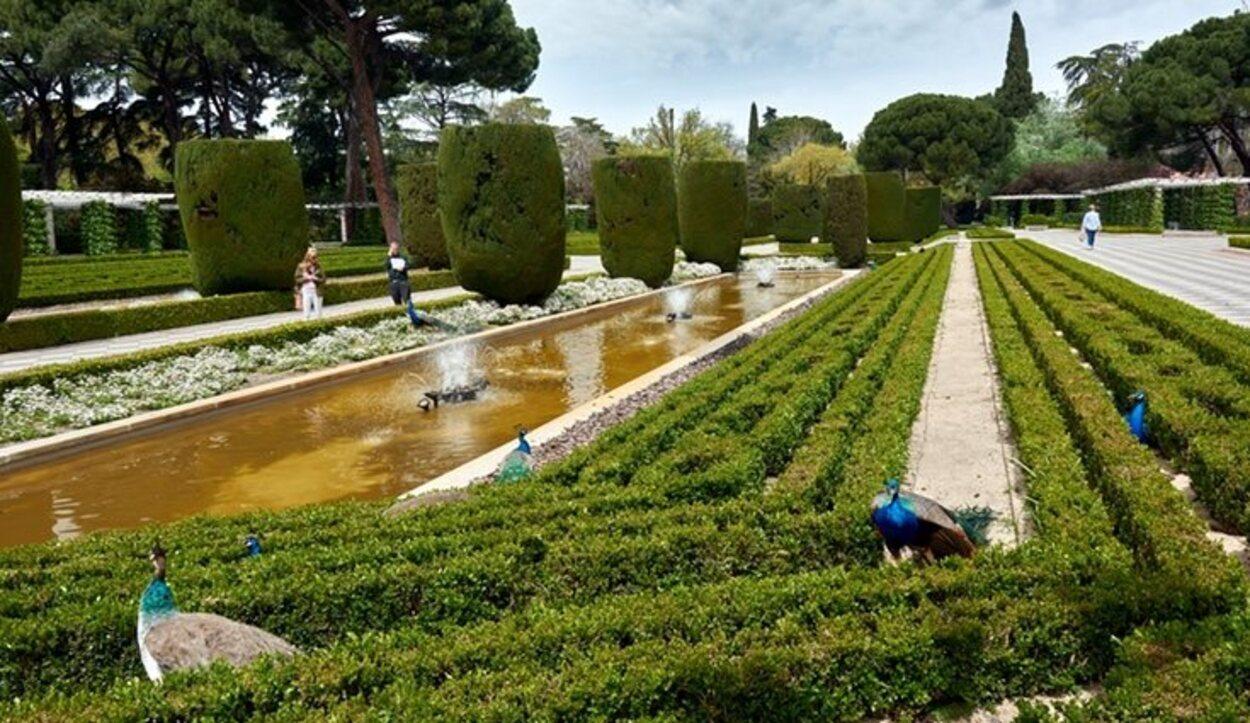 Los Jardines de Cecilio Rodríguez destacan por sus pavos reales