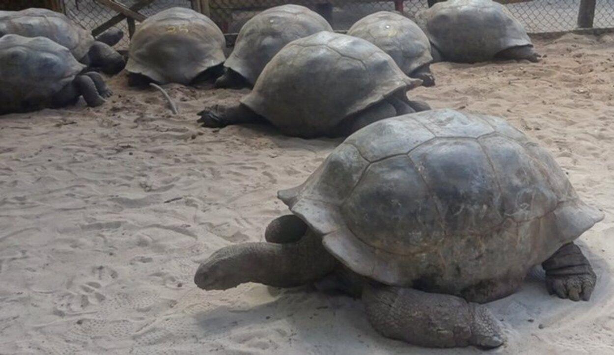 Tortugas en la isla Curieuse/ Foto: Tamara Garco