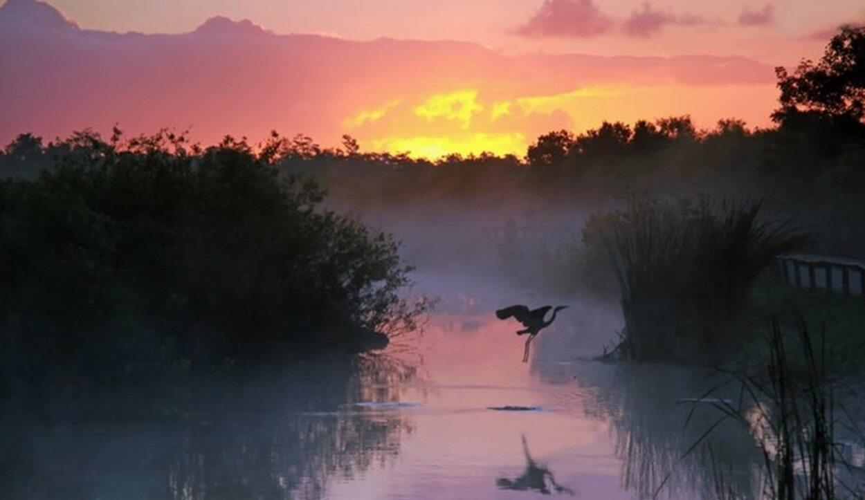 Los Everglades es una vista obligatoria si estás por Miami