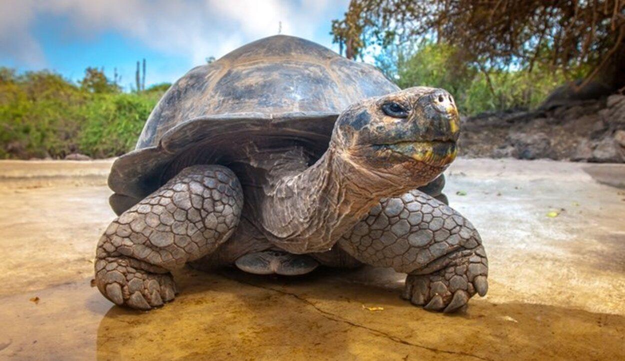 Un paraíso en mitad del Pacífico repleto de tortugas gigantes