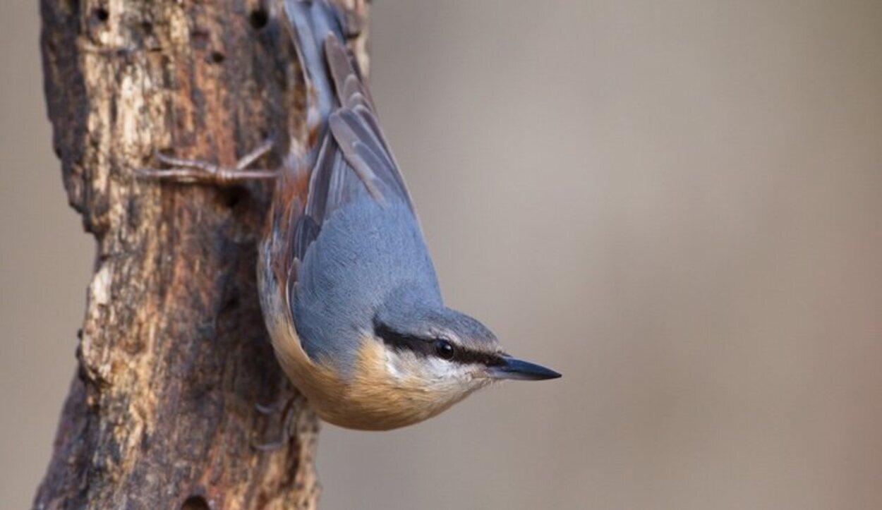 En este paraje de gran belleza conviven en perfecta armonía aves, anfibios y mamíferos