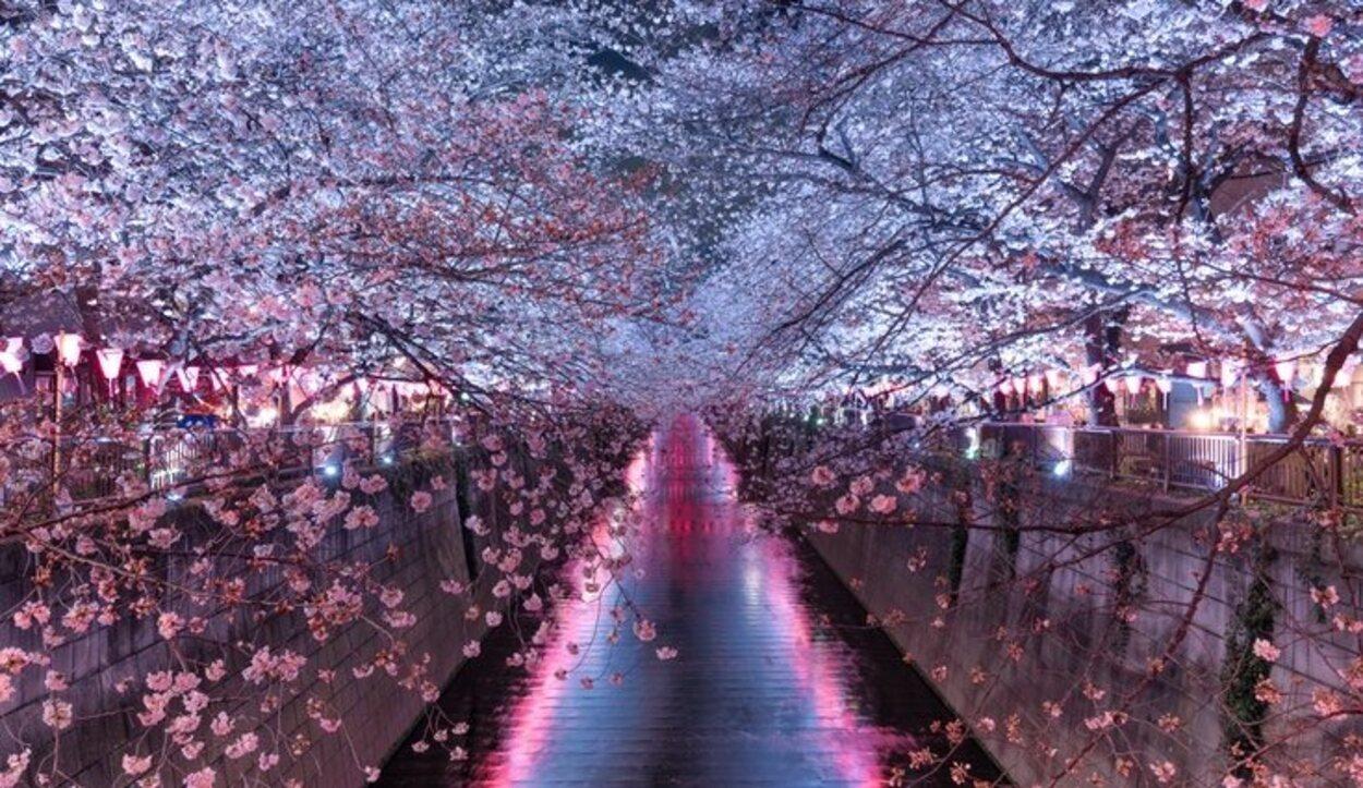 Visitar los cerezos en Japón es una de las experiencias que debes disfrutar si decides viajar a esta ciudad en primavera