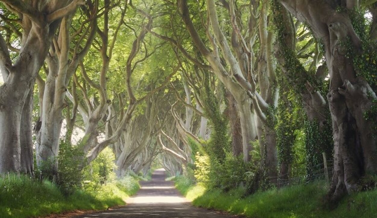 Escenario de Los bosques mágicos de setos oscuros, Irlanda del Norte