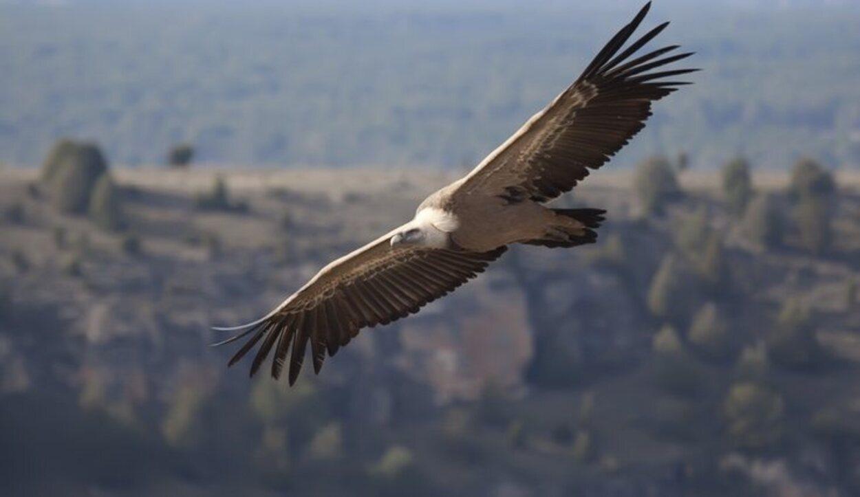 Águilas sobrevolando el cielo en el entorno de las Hoces del Duratón
