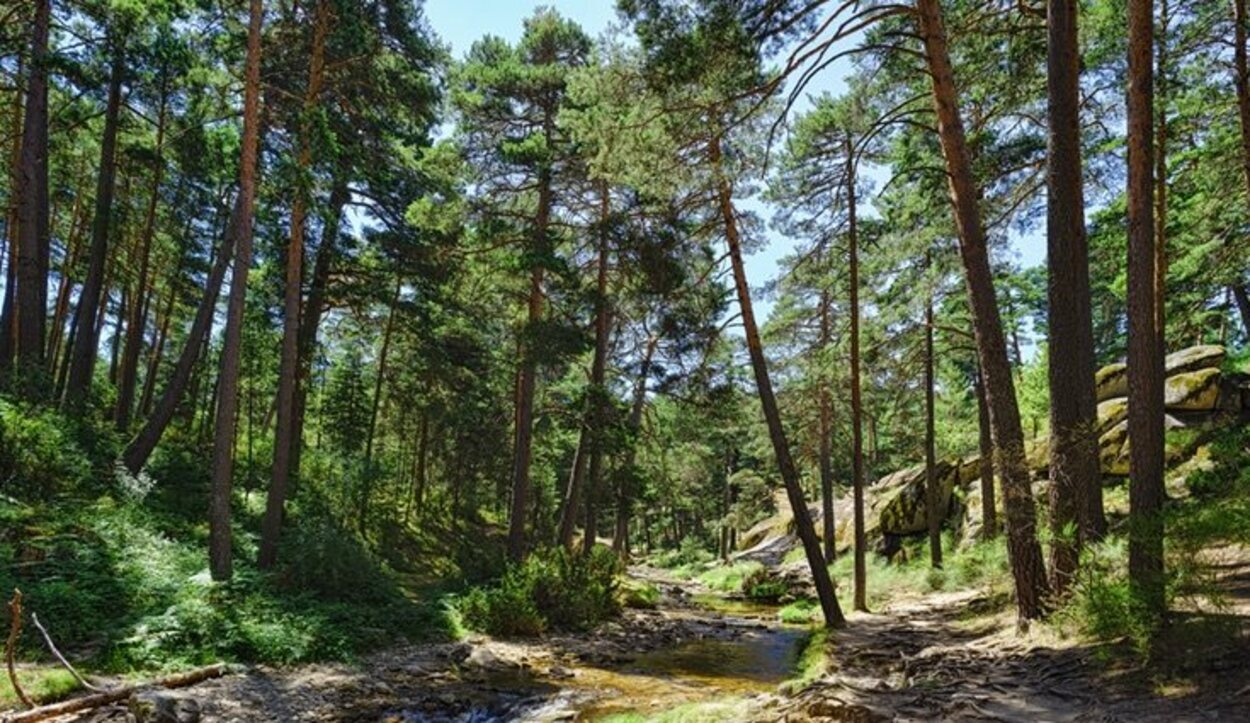 Los verdes parajes que encuentras en las sendas