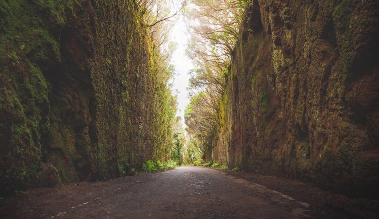 Dentro de los bosques hay varias rutas de senderismo