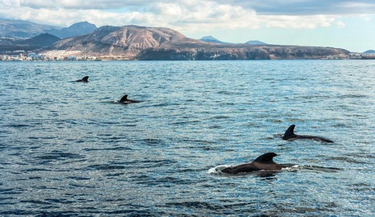 A través de una ruta en barco se puede ver a delfines y ballenas en libertad