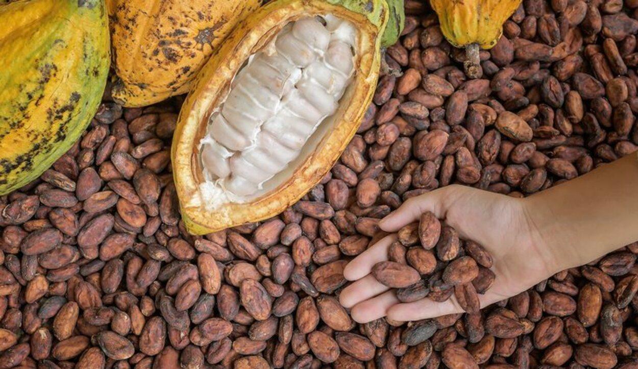 Esta región es famosa por albergar el mejor cultivo de cacao orgánico reconocido del mundo
