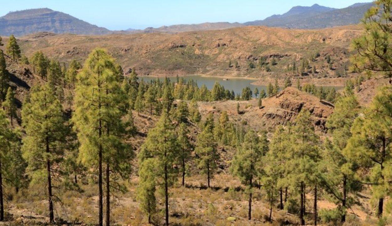 El Parque Natural de Tamadaba es un gran pinar por el que se pueden hacer rutas