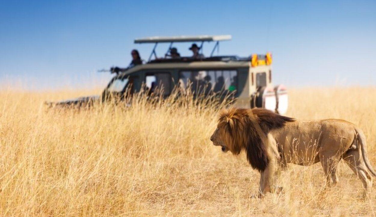 Los mejores lugares para hacer esta excursión son Kenya y Tanzania