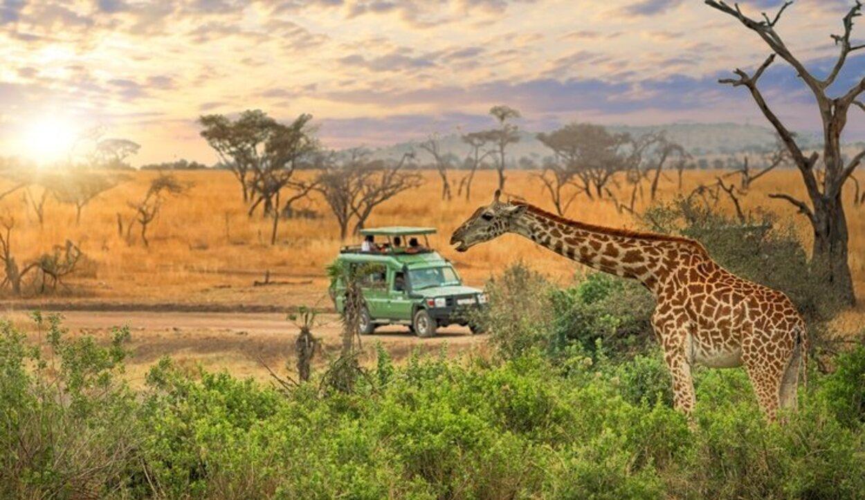 Hay que informarse sobre los lugares donde se hace un safari