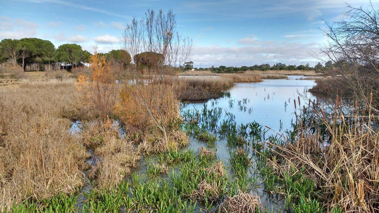 El parque de Doñana por se extiende por tres provincias andaluzas : Huelva, Sevilla y Cádiz