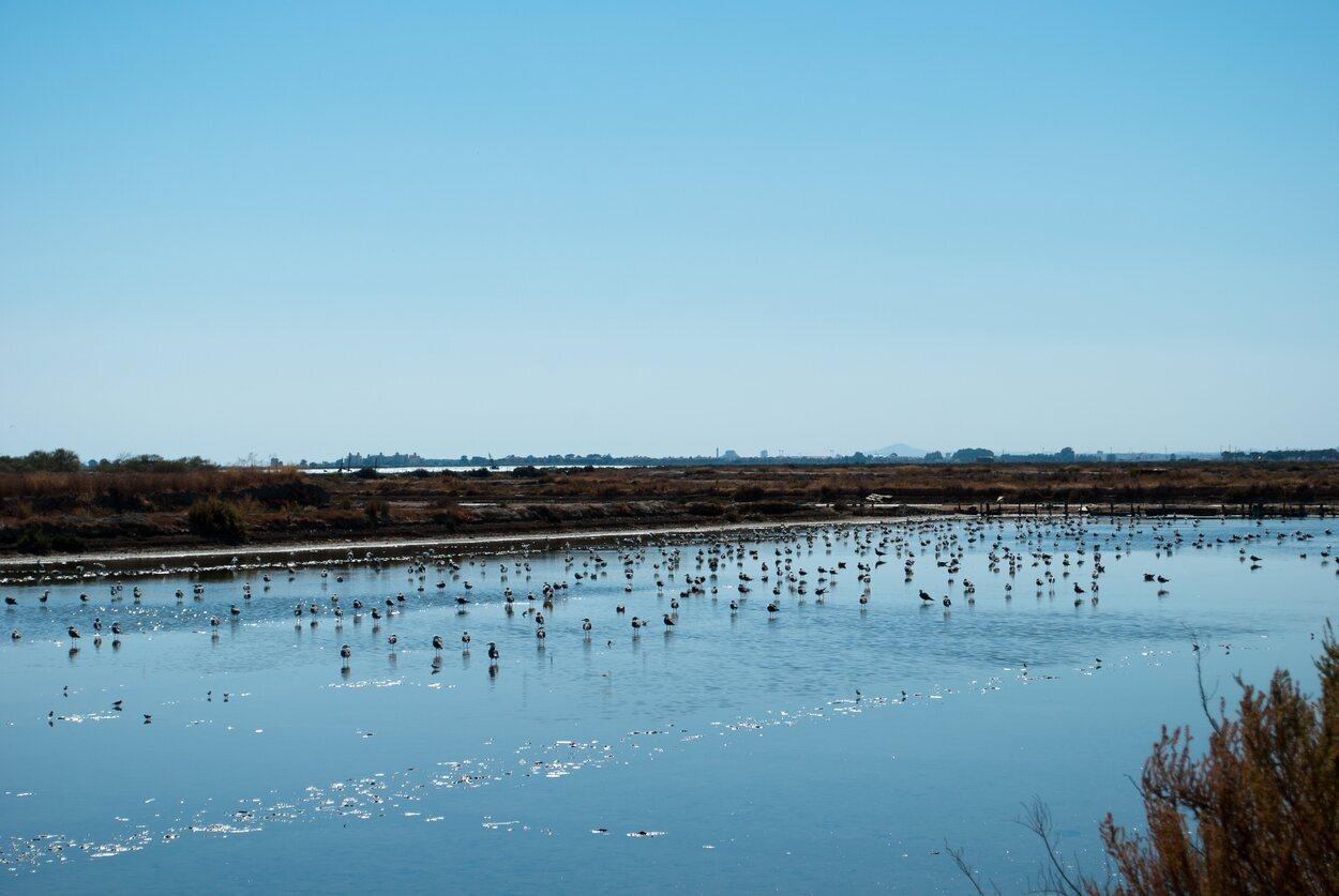 Las marismas del parque de Doñana