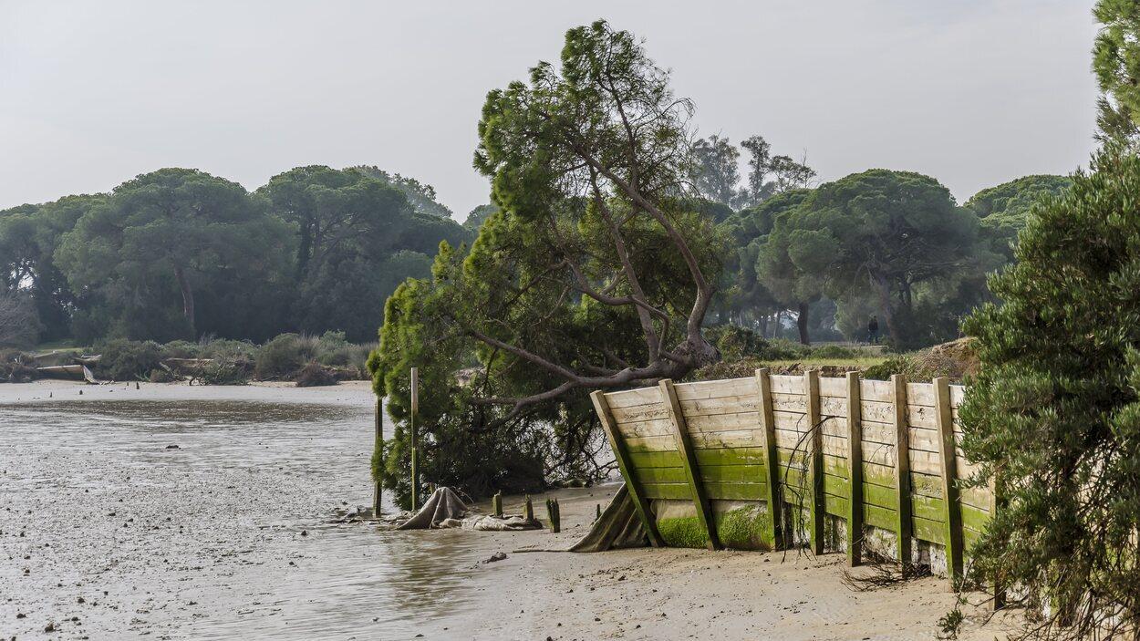 La riqueza natural del parque de Doñana siempre ha sido el foco de las miradas humanas