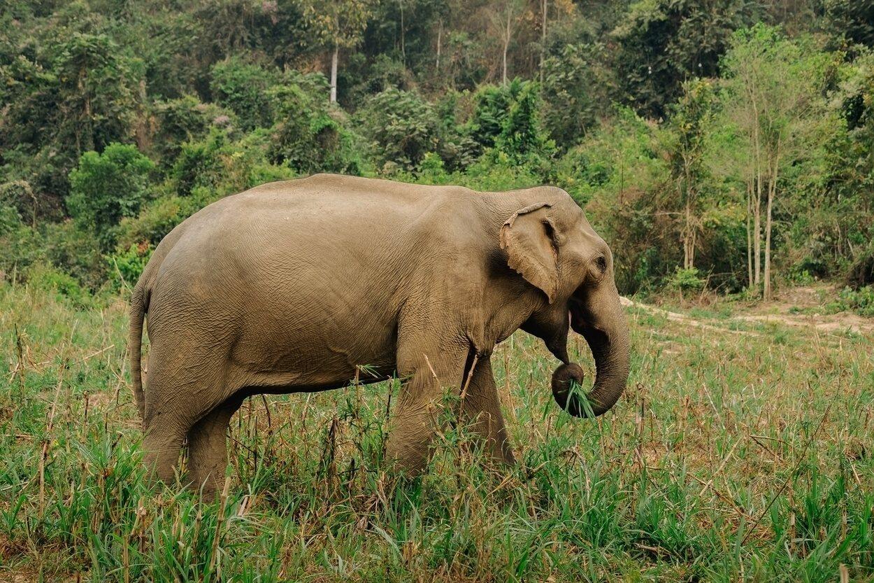 En Boon Lott se pueden ver elefantes en libertad