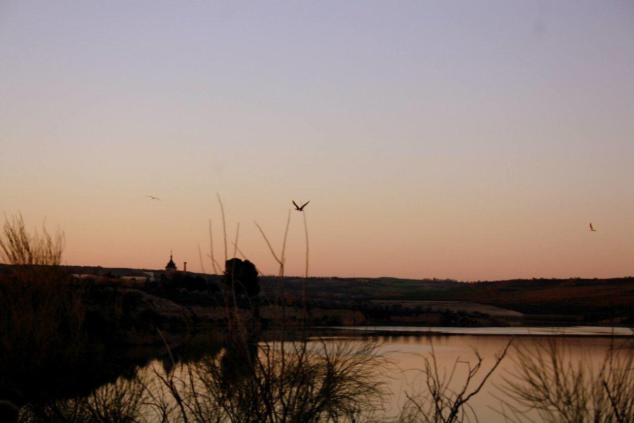 Los pájaros se encuentran muy cerca de la orilla/ Foto: Tamara García Copado