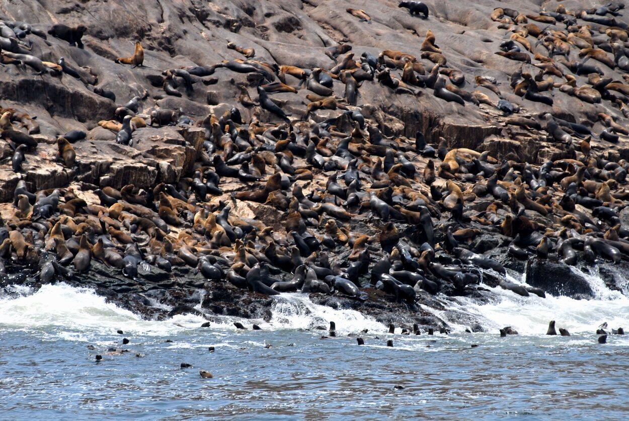 Los lobos marinos son de lo más sociables y amigables con los visitantes