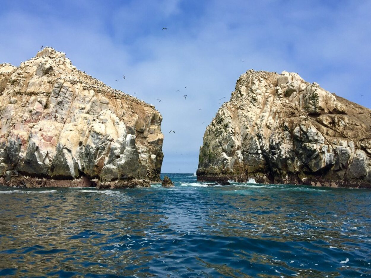 Las Islas Palomino son el mejor lugar para acercarse al mundo animal