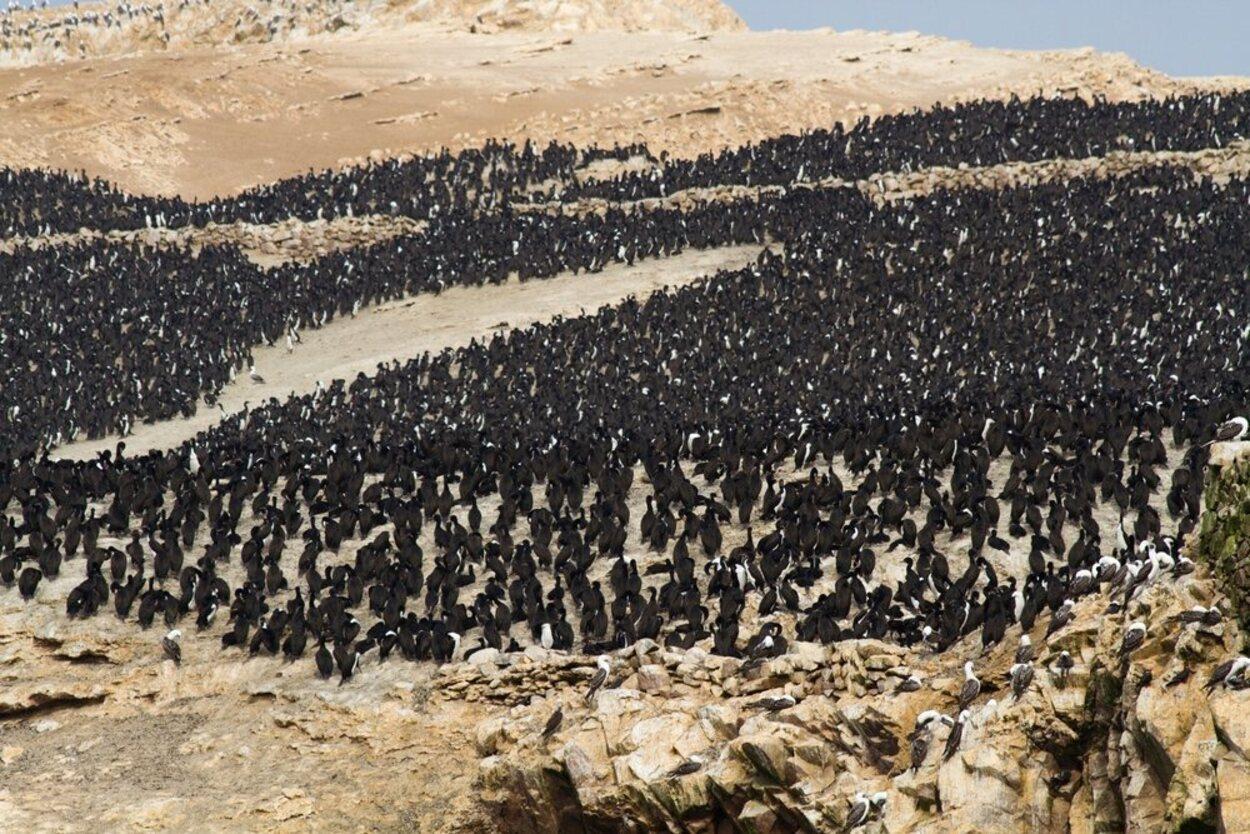 Los pingüinos son una de las características más llamativas de estas islas