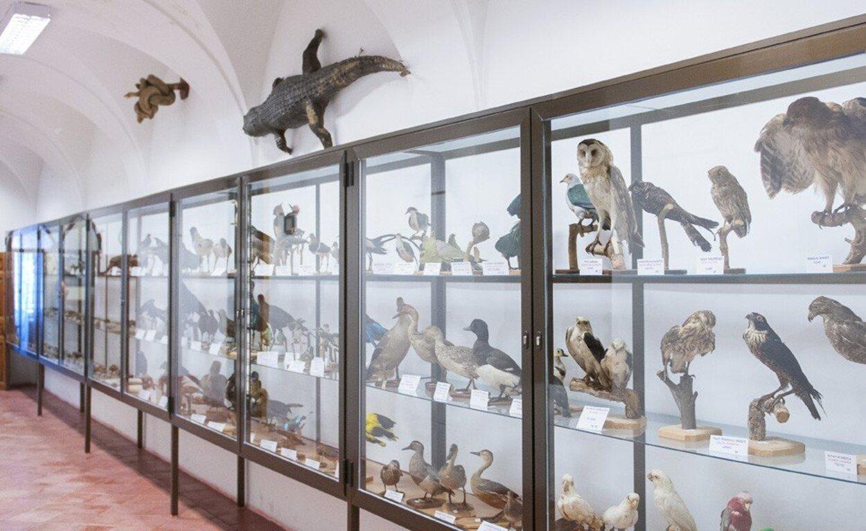 Una de las vitrinas del museo de Historia Natural