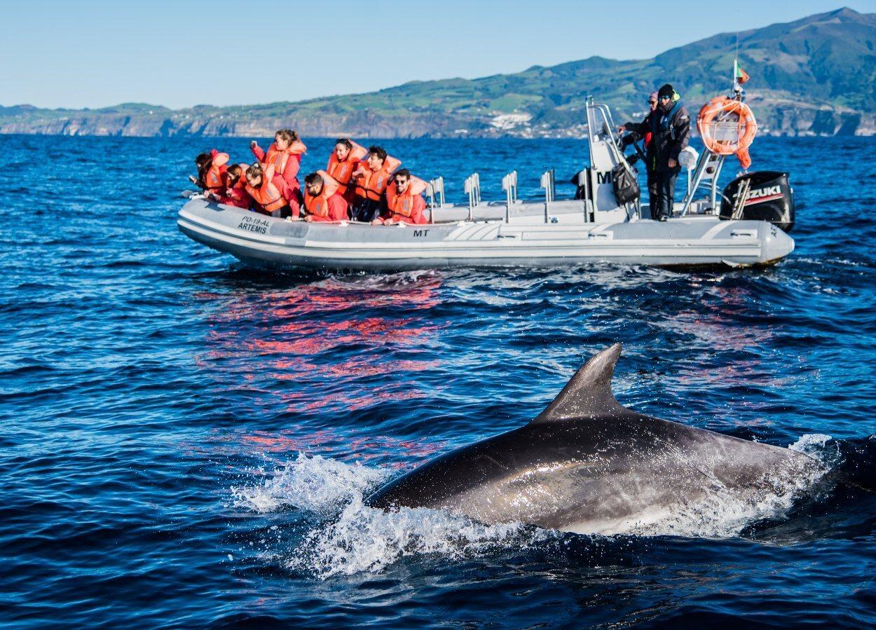 Las aguas de Azores cuenta con una buena colonia de cetáceos