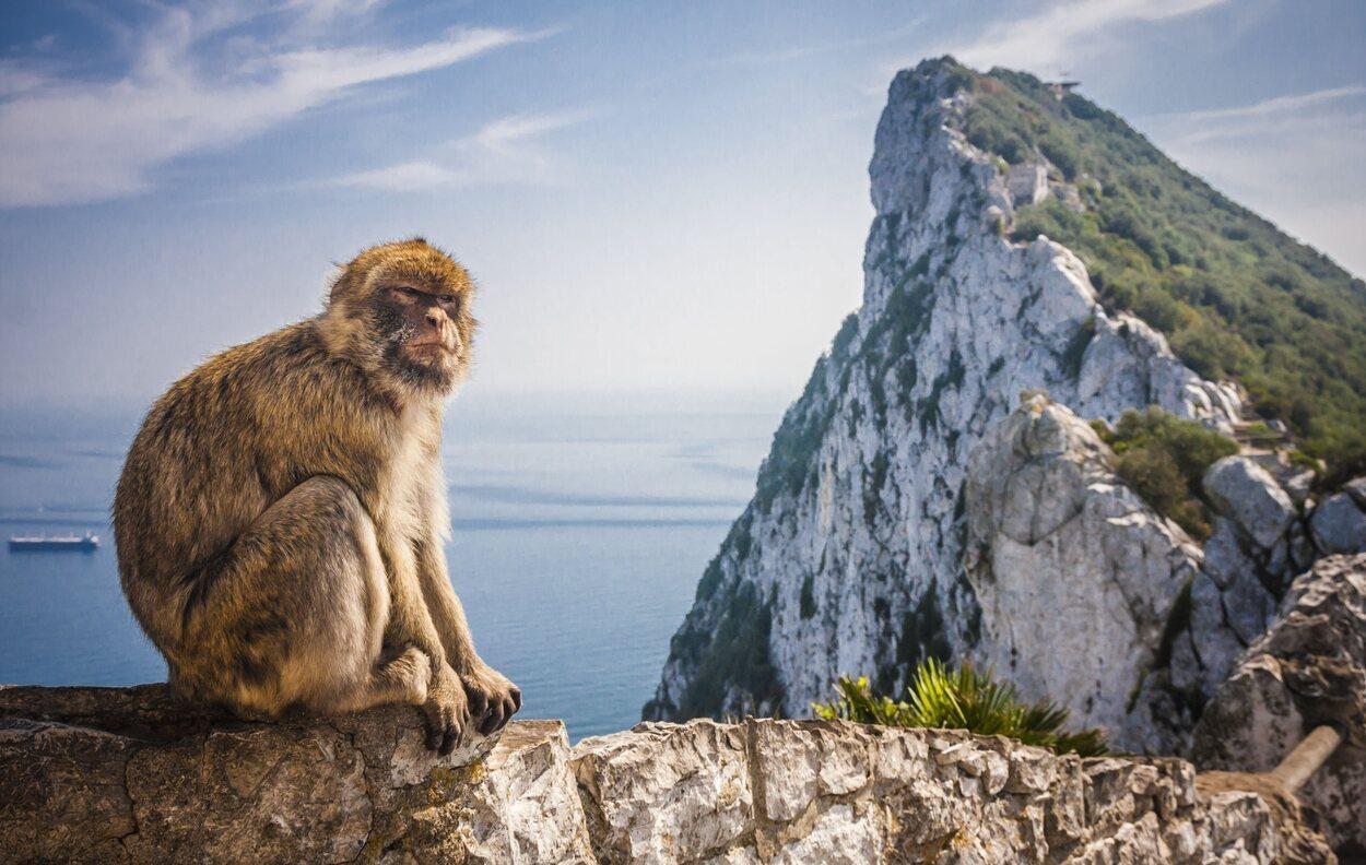 Los macacos de Gibraltar en un mirador